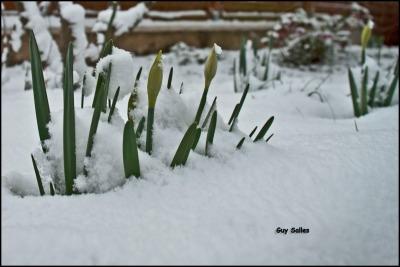 douelle-neige-DSC_4410