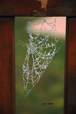 toile d'araignée givrée