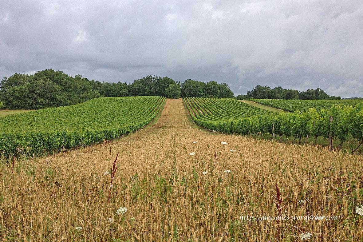 vigne-20130729