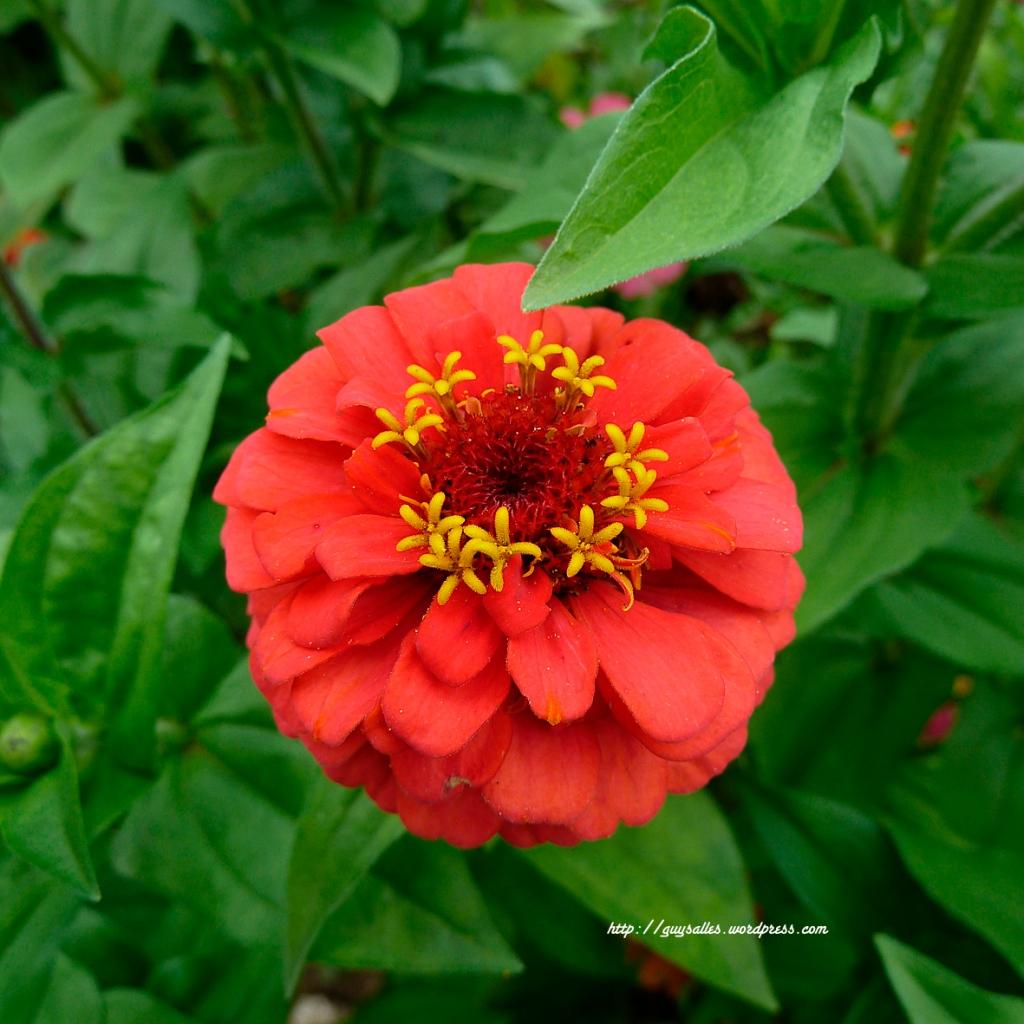 fleur-P1050309