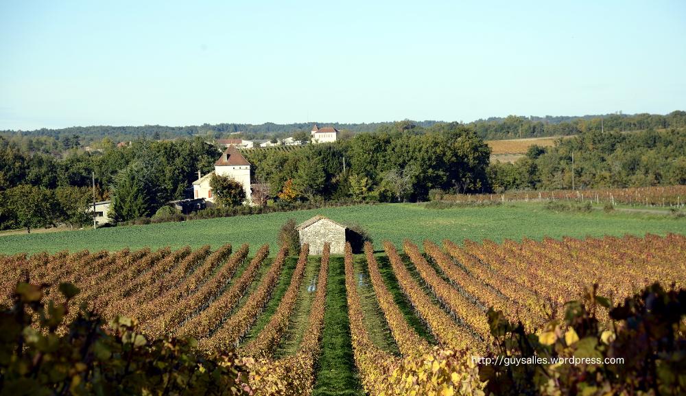 automne-vignes