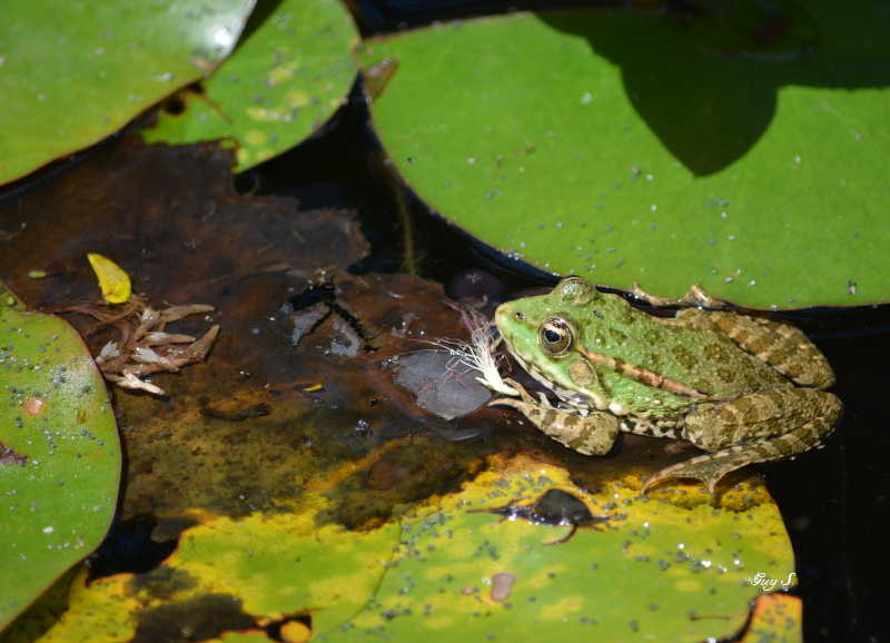 grenouille_20140711_145148
