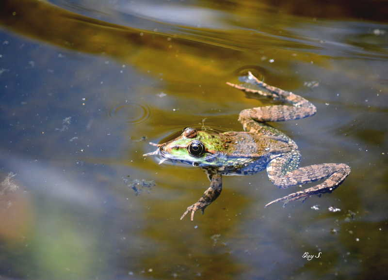 grenouille_20140711_151136