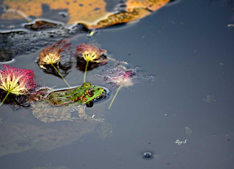 grenouille_20140711_185654