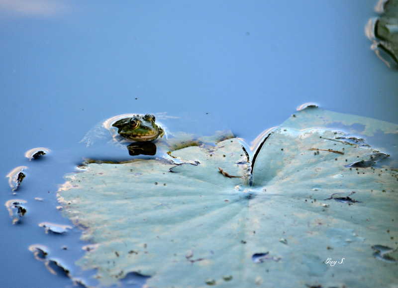 grenouille_20140711_213644