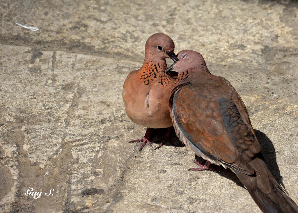 pigeon_istambul_20140412_101929