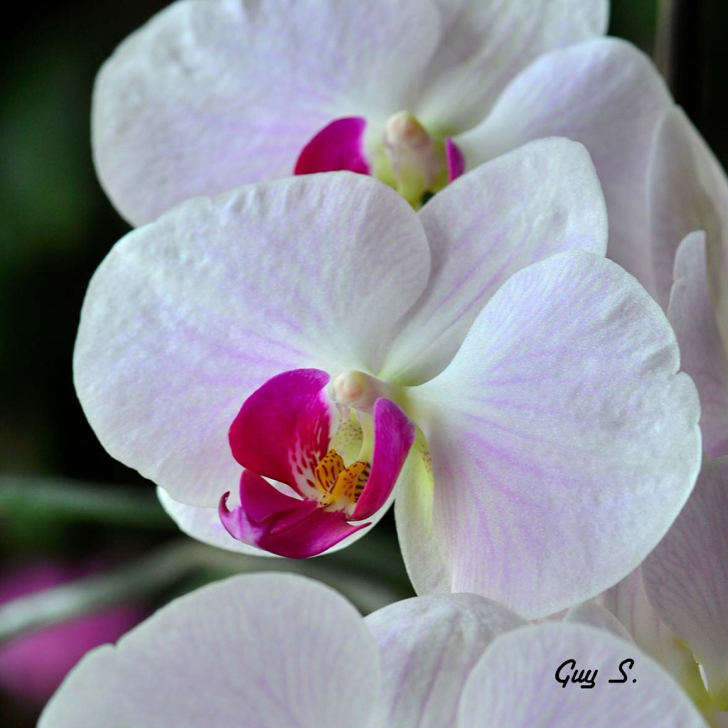 orchidee_20150316_135317