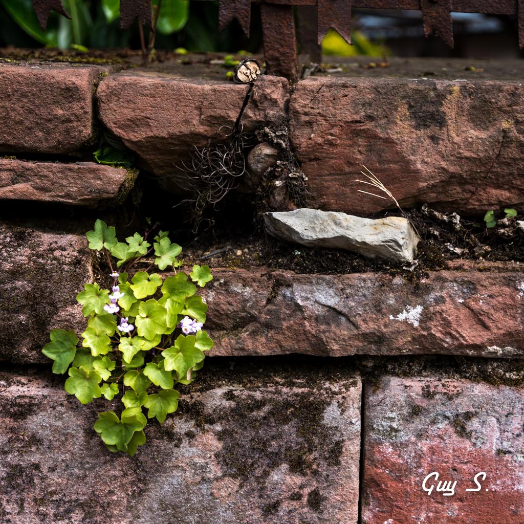 fleur-mur-9710