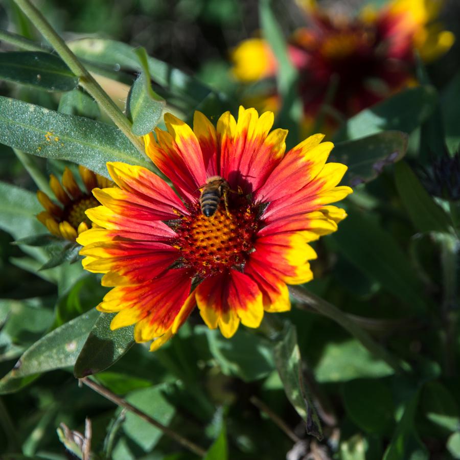 abeille-8019