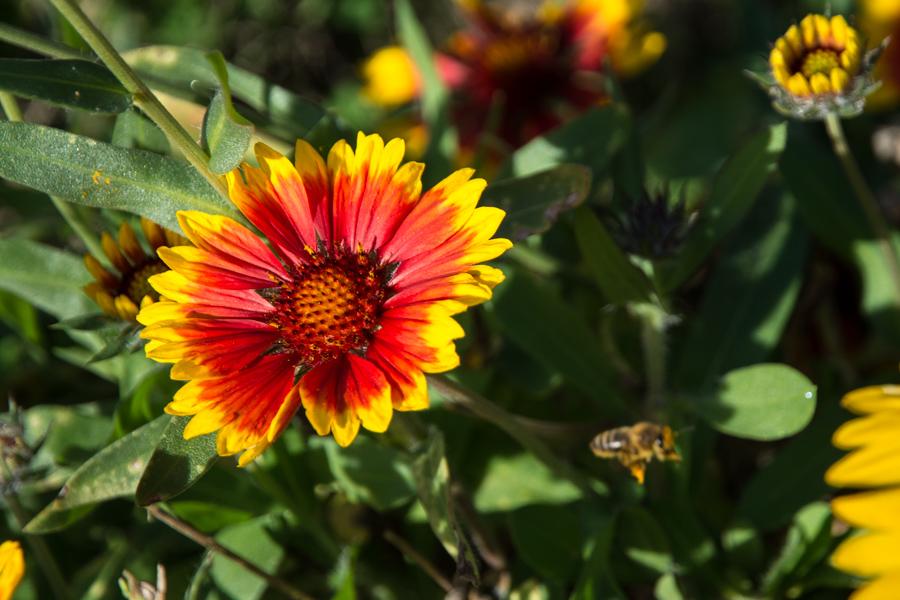 abeille-8020