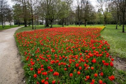 120000 tulipes
