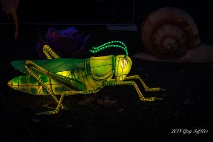 Monde des insectes